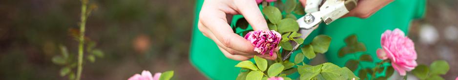 Γενικές συμβουλές για τη φύτευση και τη φροντίδα των φυτών