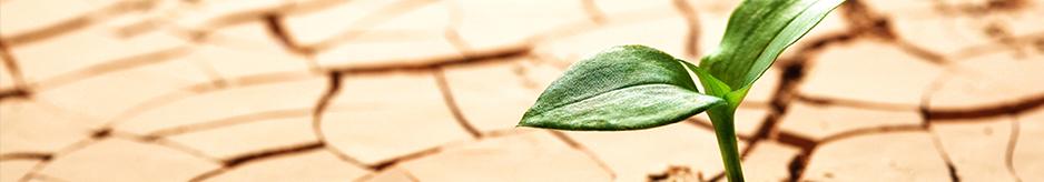 Φυτά ανθεκτικά στην ξηρασία