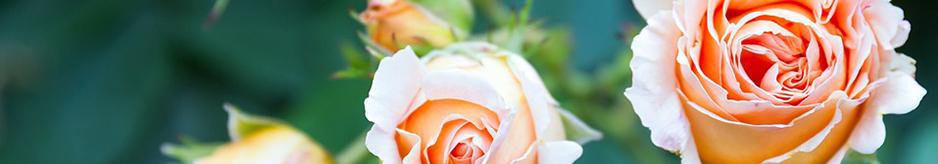 Φυτά με αρωματικά άνθη