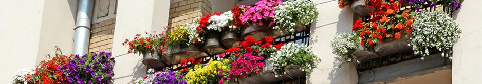Φυτά για βεράντες