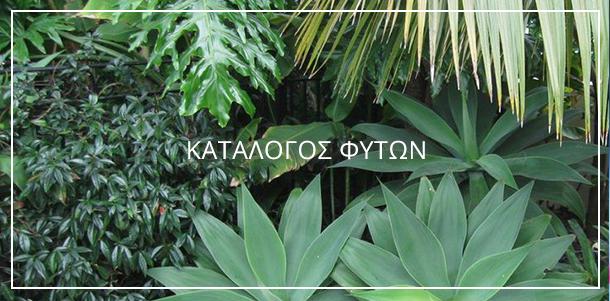 Κατάλογος Φυτών