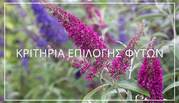 Κριτήρια επιλογής φυτών