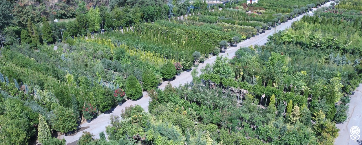 Μεγάλα Φυτά